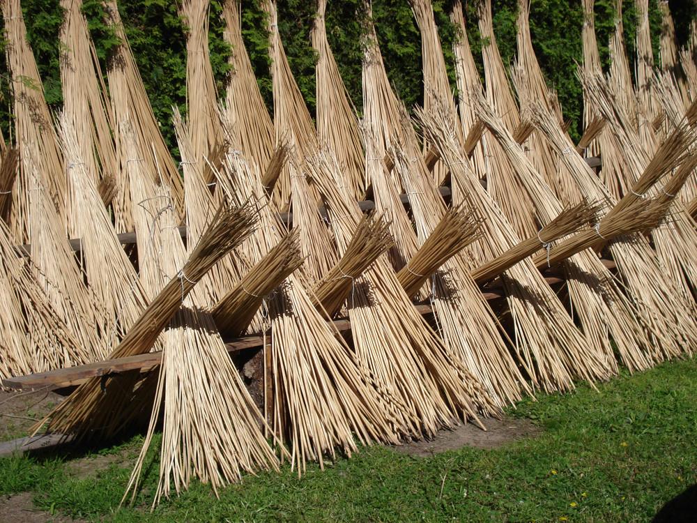 Заготовка ивовых прутьев для плетения